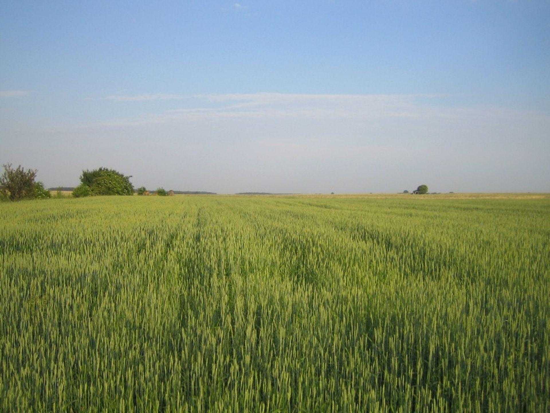 Inwestorzy z zachodu wykupią polską ziemię